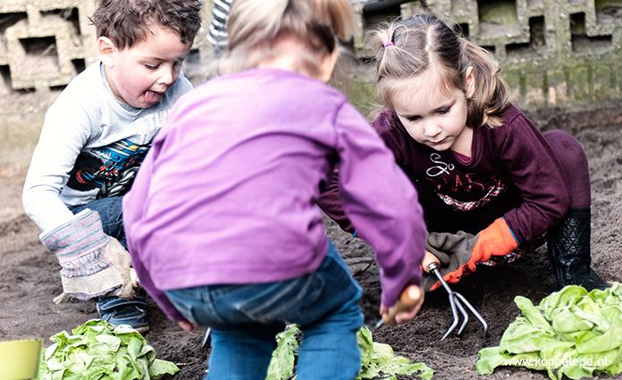 Kindercentrum Kierewam heeft twee groepen kinderopvang en een bso. Het kindercentrum ligt naast de K. Norelschool in de wijk Burgerenk in Epe.
